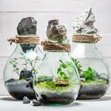 Le pot renversant avec la forêt vivante, sauvent l'idée de la terre Image stock