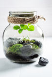 Le pot renversant avec le morceau de forêt, sauvent l'idée de la terre Images libres de droits