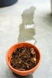 Le pot sec de tonne a juste reçu l'eau Photographie stock libre de droits