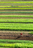 Le potager Image stock