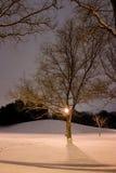Le poteau, la côte de Milou, les arbres et ce légers est horaire d'hiver Photographie stock libre de droits