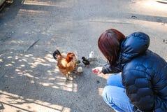 Le poulet avec des poulets marche sur l'asphalte parmi des personnes image libre de droits
