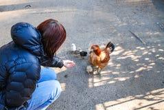 Le poulet avec des poulets marche sur l'asphalte parmi des personnes image stock