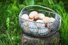 Le poulet blanc et brun eggs dans un panier en métal dans un jardin sur un tronçon Photos libres de droits
