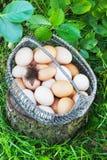 Le poulet blanc et brun eggs dans un panier en métal dans un jardin sur un tronçon Photographie stock