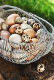 Le poulet blanc et brun eggs dans un panier en métal dans un jardin sur un tronçon Images libres de droits