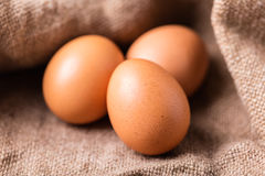 Le poulet de Brown eggs le plan rapproché Photographie stock