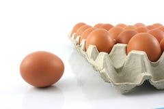 Le poulet eggs dans le carreau de papier sur le fond blanc Photos stock