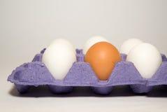 Le poulet eggs dans le paquet à vendre dessus au-dessus de blanc Photo stock