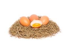Le poulet eggs dans un nid sur le fond blanc Photo stock