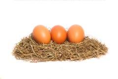 Le poulet eggs dans un nid sur le fond blanc Image stock