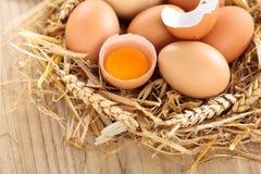 le poulet eggs l'emboîtement photos stock