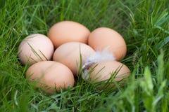Le poulet eggs se situer dans un nid d'herbe verte Image libre de droits