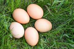 Le poulet eggs se situer dans un nid d'herbe verte Images stock