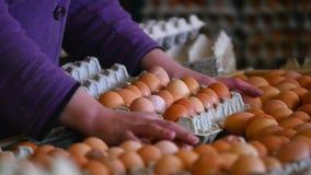 Le poulet frais et cru eggs sur une bande de conveyeur, étant déplacé à l'installation d'emballage Consommationisme, production d clips vidéos