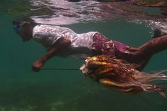 le poulpe sur l'île de fouineur soit photographie stock libre de droits