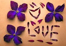 Le pourpre fleurit le studio des textes d'amour de pétales Photo libre de droits