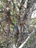 Le poussin est tombé hors du nid photographie stock libre de droits