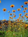Le pouvoir de couleurs de fleurs Photos libres de droits