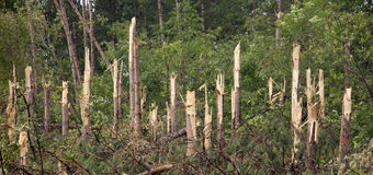 Le pouvoir de nature, arbres était enclenché dans demi de tempête de tornade Photos stock