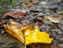 Le pozze dell'autunno Fotografia Stock Libera da Diritti