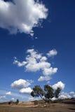 Le pré contacte le ciel Photographie stock libre de droits