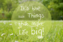 Le pré de Gras, Daisy Flowers, citent de petites choses rendent la vie grande Photo libre de droits