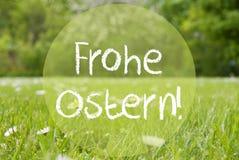 Le pré de Gras, Daisy Flowers, Frohe Ostern signifie Joyeuses Pâques photos stock
