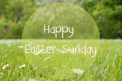 Le pré de Gras, Daisy Flowers, textotent le dimanche de Pâques heureux photo stock