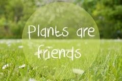Le pré de Gras, Daisy Flowers, usines des textes sont des amis Photo libre de droits