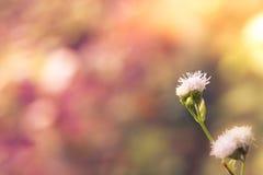 Le pré fleurit dans le matin ensoleillé tôt, automne de vintage Image stock
