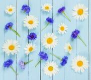 Le pré fleurit les bleuets et la camomille sur le fond bleu Image libre de droits