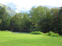 Le pré le long du courant de montagne en été Photo stock