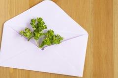Le pré sauvage fleurit avec le papier ouvert enveloppent sur le fond en bois Configuration plate Vue supérieure photo libre de droits