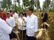 Le Président Jokowi Photo stock