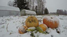 Le precipitazioni nevose in azienda agricola fanno il giardinaggio sulle zucche ammucchiano e, lasso di tempo archivi video