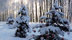Le precipitazioni nevose nella foresta, ramo dell'abete con un giocattolo di Natale ondeggiano nel vento video d archivio