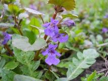 Le premier fleurit au printemps Image stock