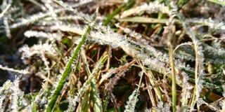Le premier gel d'automne, herbe bleue photos libres de droits