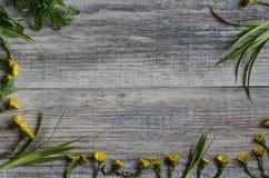 Le premier ressort fleurit le stoutout sur les conseils en bois Photos libres de droits
