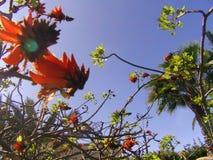 Le printemps… a monté des feuilles, fond naturel photo stock