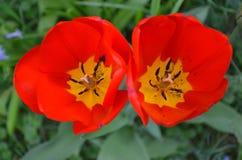 Le printemps… a monté des feuilles, fond naturel Photo libre de droits
