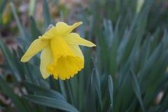 Le printemps… a monté des feuilles, fond naturel Image stock