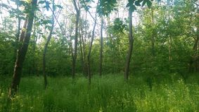 Le printemps… a monté des feuilles, fond naturel Photos libres de droits