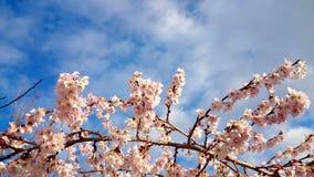 Le printemps vient photos libres de droits