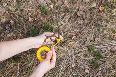 Le processus de greffer des arbres dans le jardin image libre de droits