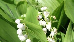 Le processus de la pollinisation de fleur banque de vidéos