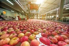 Le processus de laver des pommes dans une usine de fruit Images libres de droits