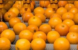 Le processus de nettoyage des oranges Images libres de droits
