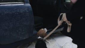 Le propriétaire de chiens ouvre la portière de voiture Le petit chien saute dans la voiture Vue arrière de chien de briquet Saute banque de vidéos